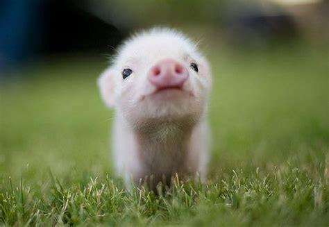unbelievably cute animals adorable