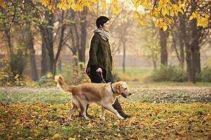A perfect stroll techniques for walking your dog like a for Puppy dog walker