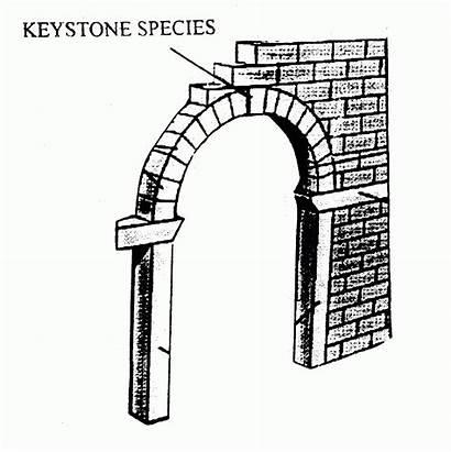Keystone Species Sharks Feed Key Ecological Ecology