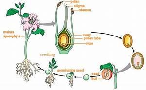 Mulitcellular Organisms