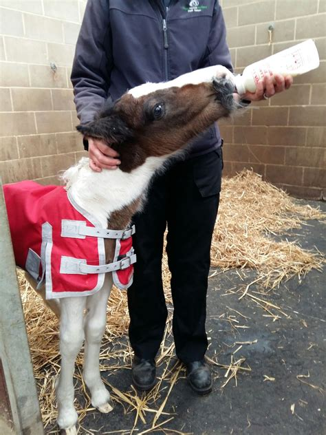 New Born Foal Dumped In Popular Tourist Spot Charity