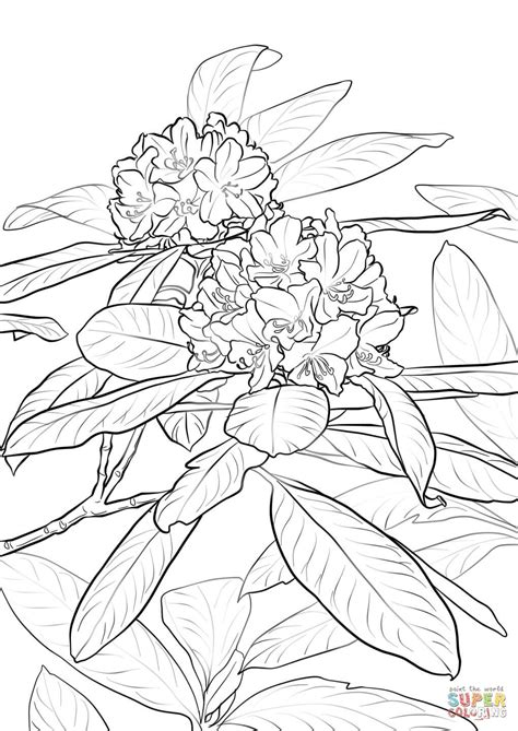 pacific rhododendron coloring page  printable