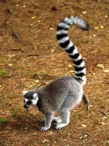 Madagascar Animals Names