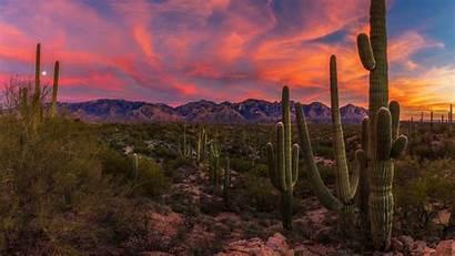 Cactus Desert Sunset Arizona Saguaro Sonoran Wallpapers