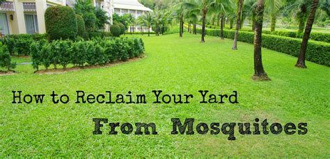 Mosquito Backyard - how to reclaim your yard from mosquitoes wisconsin