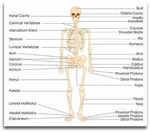 Bones  U2013 Instride Online