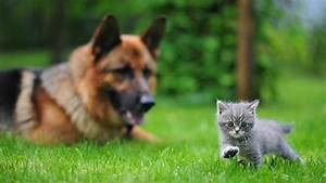 Animals, Dogs, Kittens, 1920x1080, Wallpaper, High, Quality, Wallpapers, High, Definition, Wallpapers