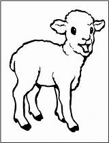 Coloring Lamb Pages Sheep Animals Printable Outline Drawing Animal Colouring Farm Clip Template Sweet Fun Clipart Spring Children Paintingvalley Bestcoloringpagesforkids sketch template