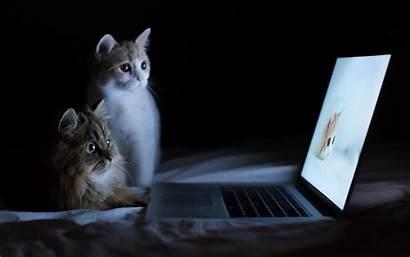 Laptop Cat Wallpapers Backgrounds Desktop Bed Humor