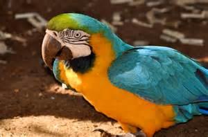 South America Wildlife Animals