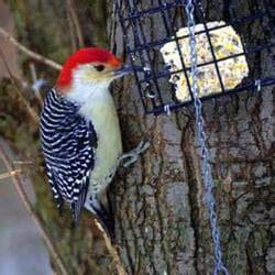 wild birds unlimited bird shops 386 columbia rd