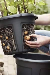 Easy, Access, Potato, Pot, Planter