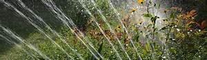 Blumen Bewässerung Im Urlaub : blumen bew ssern im urlaub top 5 m glichkeiten ~ Orissabook.com Haus und Dekorationen