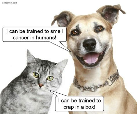 dogs cats better why than then dog cat foster annalee via