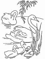 Coloring Swans Printable Pages Adult Fairy Thegraphicsfairy Graphics Books Drawings sketch template
