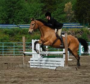 Palomino Horses Jumping | www.imgkid.com - The Image Kid ...