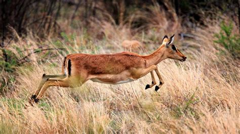What Are the Types of African Antelope? Reference com