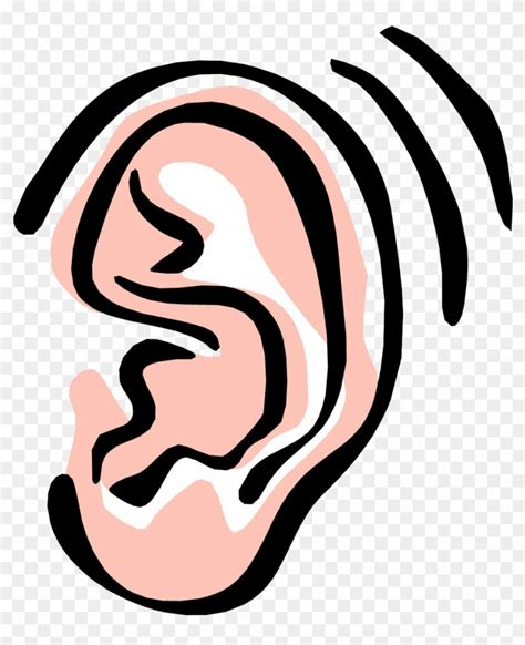 Ear Clip Clip Ear Www Pixshark Images Galleries With A