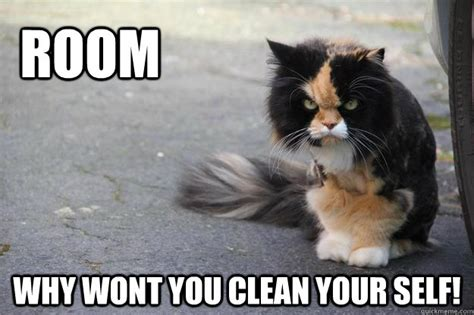 Clean Cat Memes Image Memes At Relatably.com