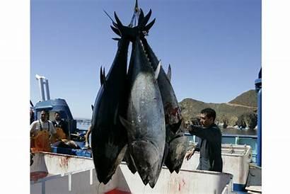 Extinction Mass Humans Sixth Causing Csmonitor Tuna
