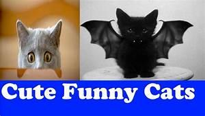 Top Ten Cute Funny Cat Videos 2016