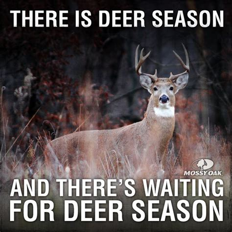 deer season quotes funny