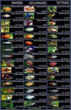 types  community fish wwwkhoaweeblycom tetras