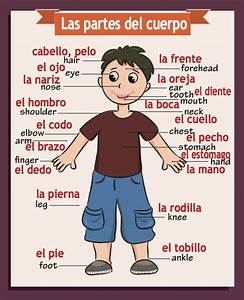 Spanish  English Classroom Poster Body Parts