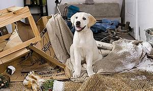 Marley & Me Trailer - ThingLink