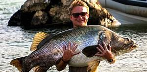 Nile Perch & Yellow Fish, Lake Turkana - Pesqa