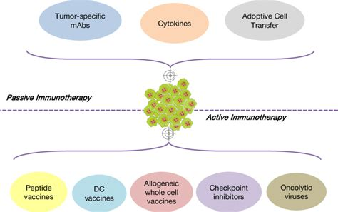 cancer immunotherapy approaches  classified