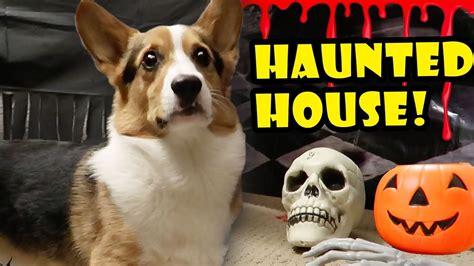 corgi haunted house spooky halloween tunnel life