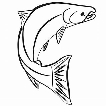 Drawing Salmon Kid Pacific Zone Scotty Atlantic