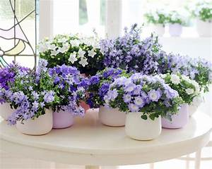 Plante Fleurie Intérieur : petite plante fleurie d int rieur l 39 atelier des fleurs ~ Premium-room.com Idées de Décoration