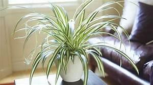 Marc De Café Plantes D Intérieur : 9 plantes d 39 int rieur qui nettoient l 39 air et qui sont quasi increvables ~ Melissatoandfro.com Idées de Décoration