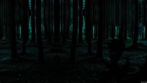 Forest, Hd, Wallpapers, Backgrounds, Wallpaper, 1920, U00d71080, Dark, Forest, Wallpaper, 42, Wallpapers