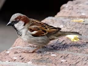 Southeast Texas Birds