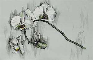 diselfcore: black and white orchid drawing