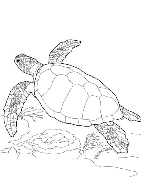 printable turtle coloring pages  kids