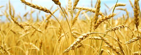 agriculture cargill canada
