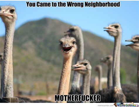 Ostrich Meme - wrong neighborhood ostrich edition by picyu91 meme center