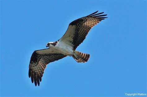 birds of usa watters photo blog