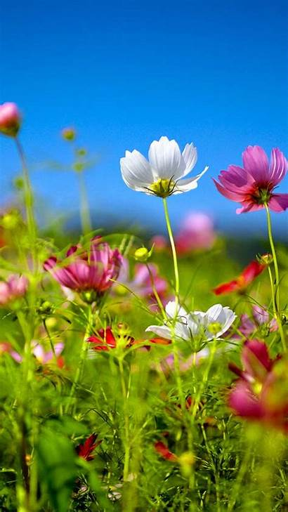 Android Wallpapers Samsung Flowers Butterfly Bloom Backgrounds