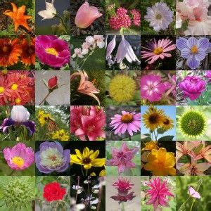 flower availability chart  month  cut wedding costs