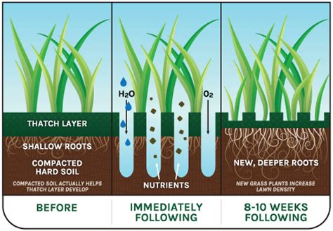 benefits of aeration fall core aerating service second nature lawn care