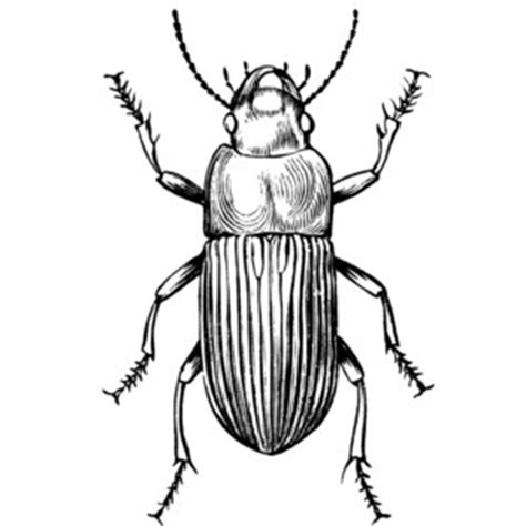 beetle clipart black and white free beetles cliparts free clip free clip