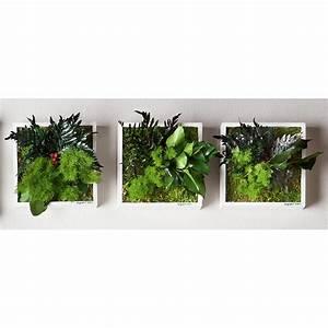 Pro Idee Solarleuchten : echtpflanzenbilder 3 jahre garantie pro idee ~ Michelbontemps.com Haus und Dekorationen