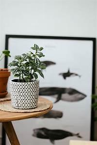 Plante Balcon Facile D Entretien : petit guide des plantes faciles d 39 entretien carnet ~ Melissatoandfro.com Idées de Décoration
