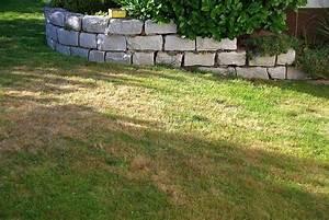 Braune Stellen Im Rasen : trockene stellen im rasen seite 1 pflanzendoktor ~ Lizthompson.info Haus und Dekorationen