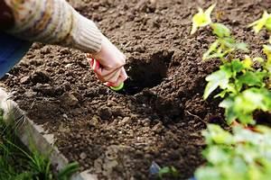Garten Pflanzen : blumen pflanzen hitze erschwert das wachstum garten news garten ~ Eleganceandgraceweddings.com Haus und Dekorationen
